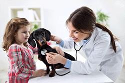 Dackel beim Tierarzt