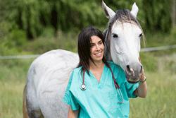 Pferd mit Tierarzt