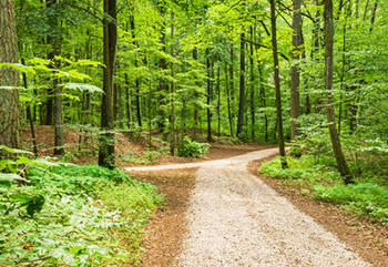 Zwei Waldwege verbinden sich zu einem Pfad